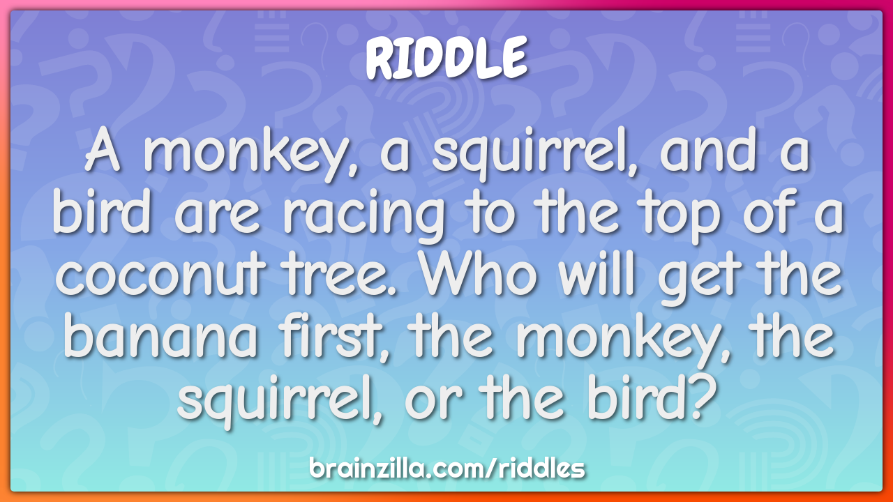 A monkey, a squirrel, and a bird are racing to the top of a coconut...