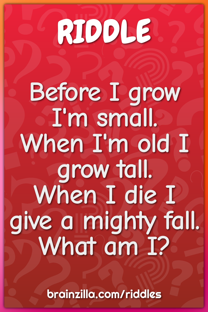 Before I grow I'm small.  When I'm old I grow tall.  When I die I give...