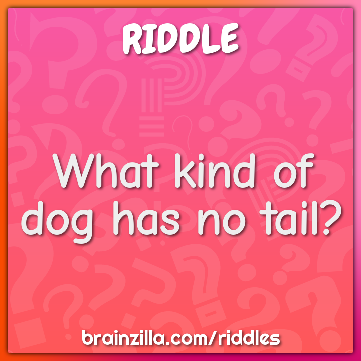 What kind of dog has no tail?